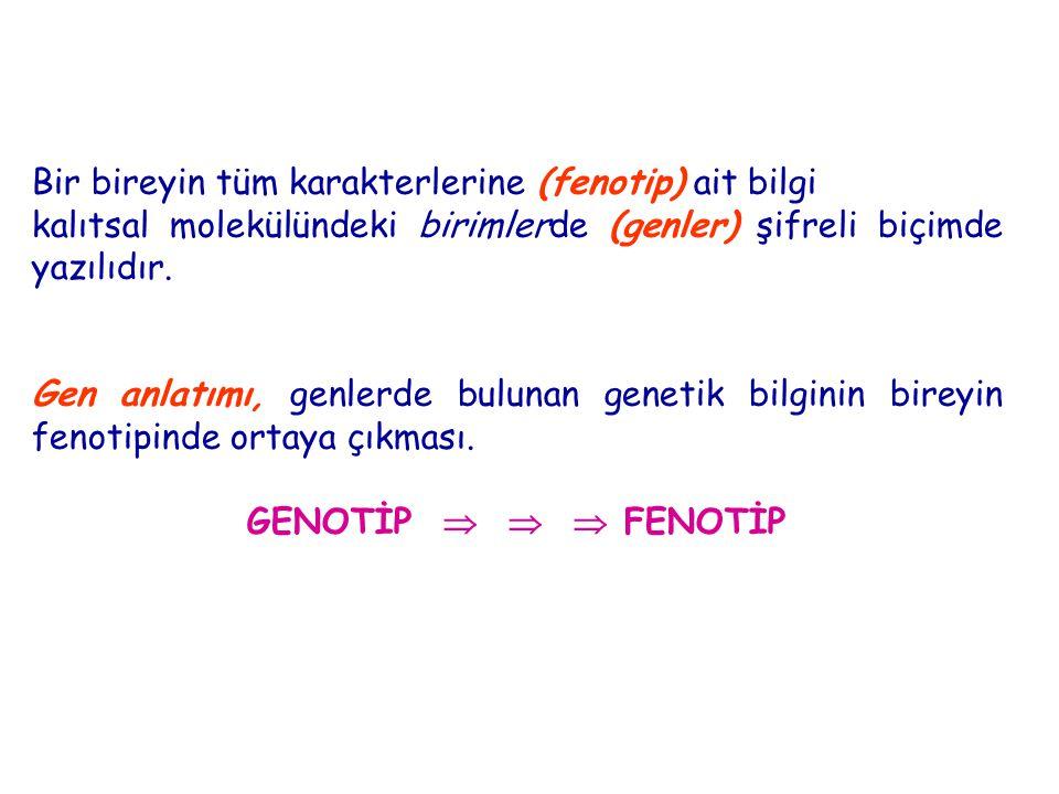 Bir bireyin tüm karakterlerine (fenotip) ait bilgi kalıtsal molekülündeki birimlerde (genler) şifreli biçimde yazılıdır. Gen anlatımı, genlerde buluna