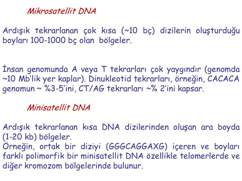 Mikrosatellit DNA Ardışık tekrarlanan çok kısa (~10 bç) dizilerin oluşturduğu boyları 100-1000 bç olan bölgeler. İnsan genomunda A veya T tekrarları ç