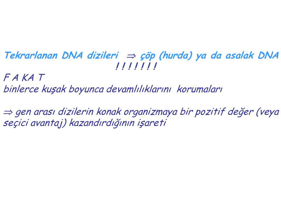 Tekrarlanan DNA dizileri  çöp (hurda) ya da asalak DNA ! ! ! ! ! ! ! F A KA T binlerce kuşak boyunca devamlılıklarını korumaları  gen arası dizileri