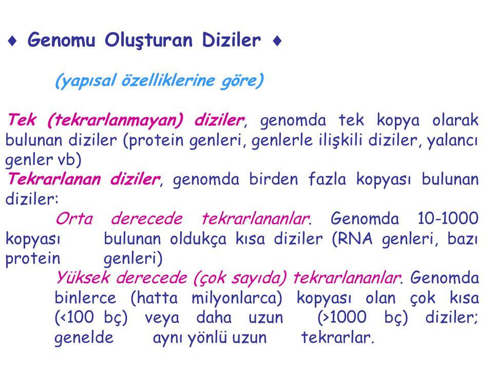  Genomu Oluşturan Diziler  (yapısal özelliklerine göre) Tek (tekrarlanmayan) diziler, genomda tek kopya olarak bulunan diziler (protein genleri, gen