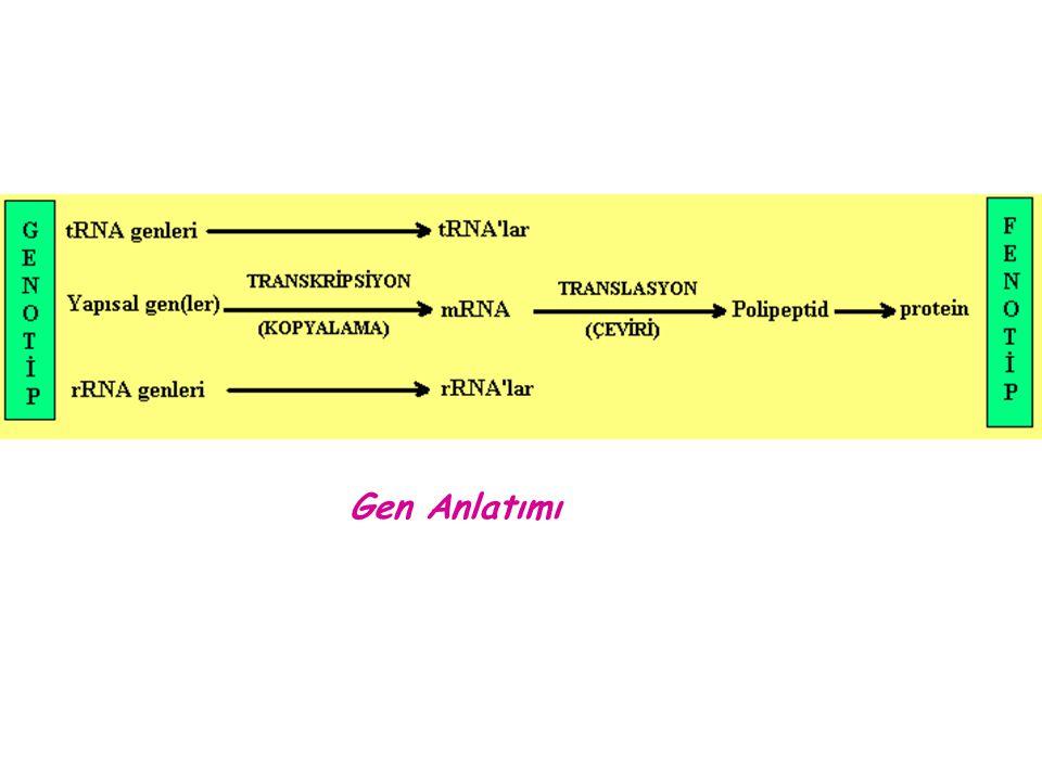 SINE'ler, ( Short Interspersed Nuclear Elements ) Genomda serpiştirilmiş, kısa (~500 bç kadar) tekrarlar.