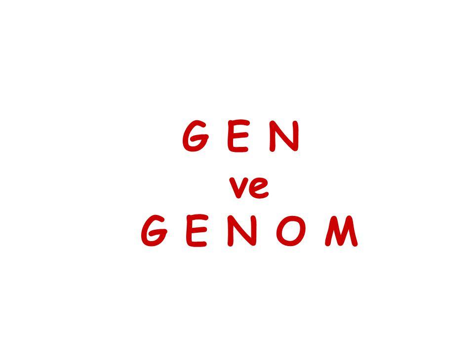  GENOM   Bir organizmanın kalıtsal molekülündeki nukleotid dizilerinin tümü (ökaryotlarda haploid kromozomlardaki ve organellerdeki DNA dizisi)