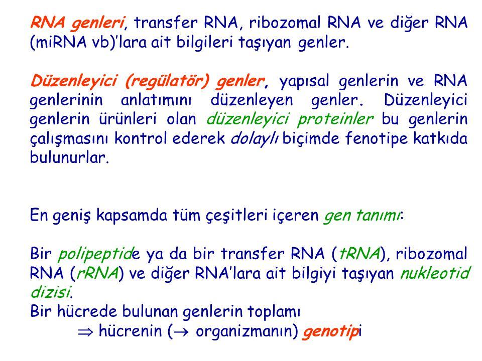 RNA genleri, transfer RNA, ribozomal RNA ve diğer RNA (miRNA vb)'lara ait bilgileri taşıyan genler. Düzenleyici (regülatör) genler, yapısal genlerin v