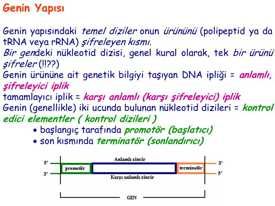 Prokaryotlarda promotör ve terminatör arasındaki şifreleme yapan diziler kesintisiz  genin nukleotid dizisiyle ürünü olan RNA arasında ortak doğrusallık ilişkisi Ökaryotlarda (ve bazı ökaryotik viruslarda) bazı genlerde, ürünlerine ait şifreleme yapan dizilerin arasında, şifreleme yapmayan dizilerin varlığı  parçalı gen ( mozayik gen ) Parçalı genlerde, şifreleme yapan diziler  ekson şifreleme yapmayan diziler  intron