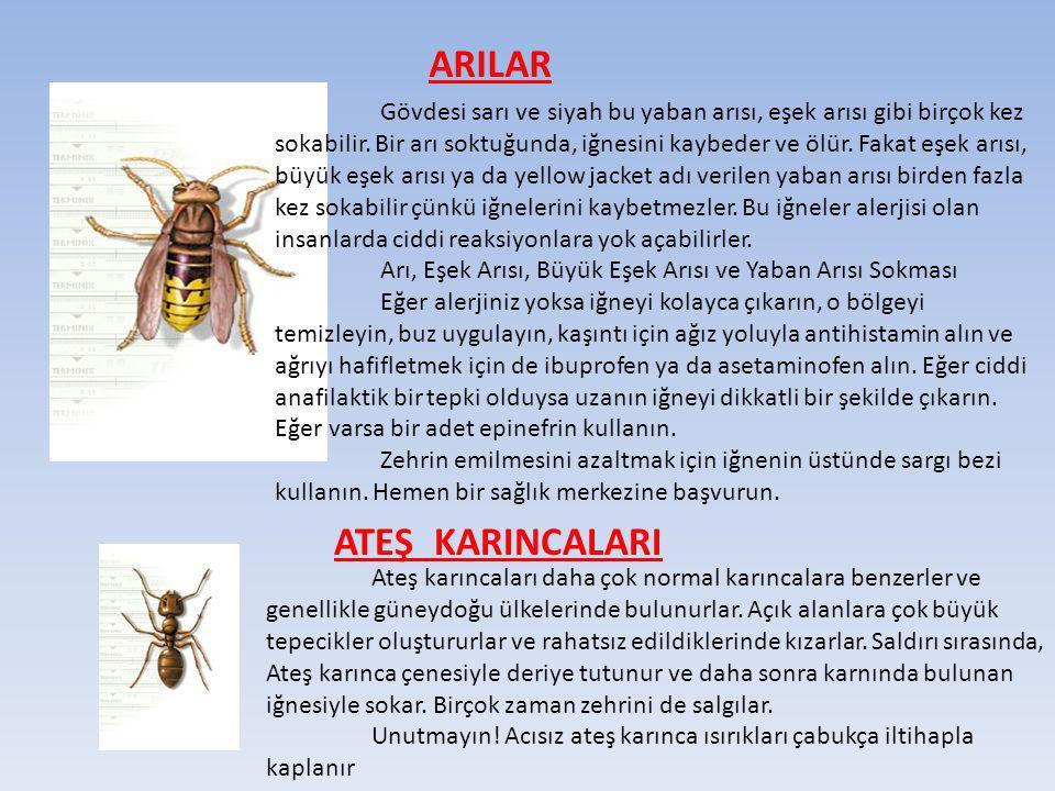 ARILAR Gövdesi sarı ve siyah bu yaban arısı, eşek arısı gibi birçok kez sokabilir. Bir arı soktuğunda, iğnesini kaybeder ve ölür. Fakat eşek arısı, bü