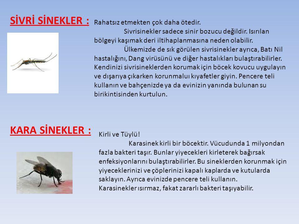 SİVRİ SİNEKLER : Rahatsız etmekten çok daha ötedir. Sivrisinekler sadece sinir bozucu değildir. Isırılan bölgeyi kaşımak deri iltihaplanmasına neden o