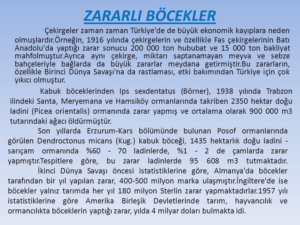 Çekirgeler zaman zaman Türkiye'de de büyük ekonomik kayıplara neden olmuşlardır.Örneğin, 1916 yılında çekirgelerin ve özellikle Fas çekirgelerinin Bat