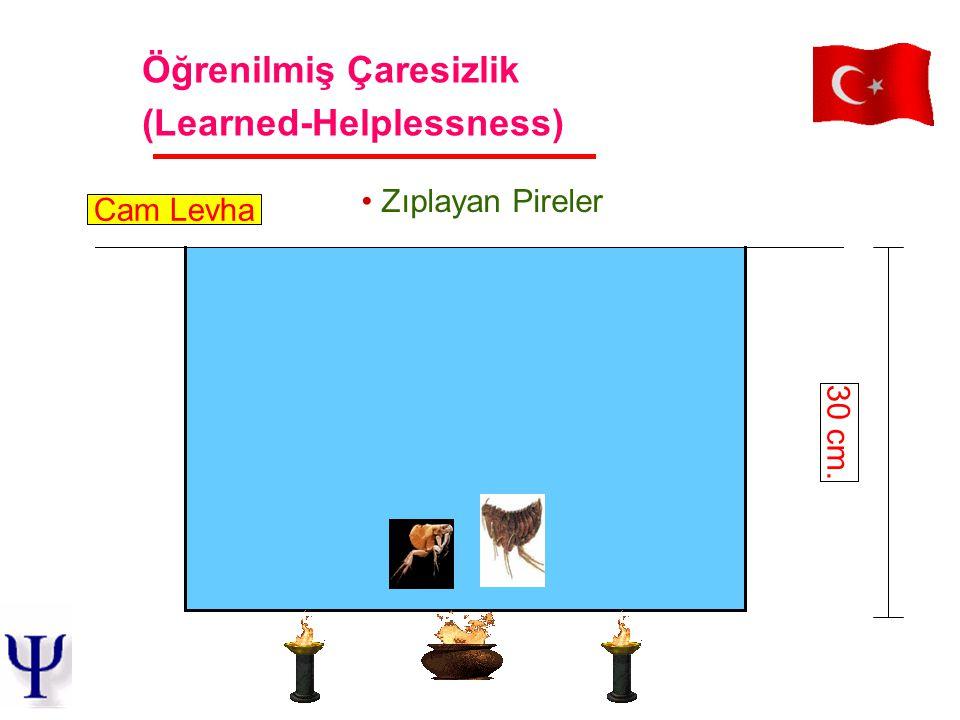 Zıplayan Pireler 30 cm. Cam Levha Öğrenilmiş Çaresizlik (Learned-Helplessness)