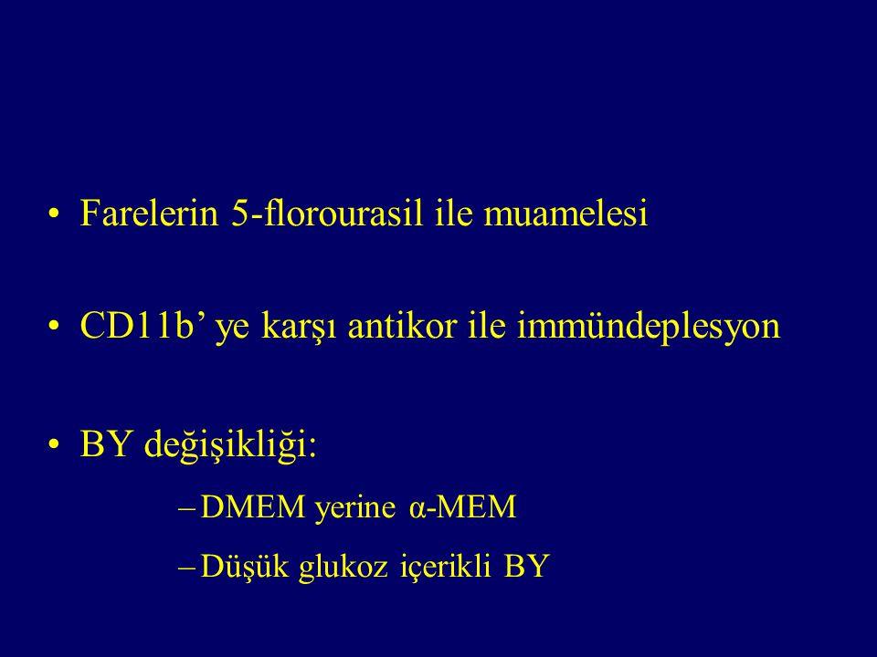 Farelerin 5-florourasil ile muamelesi CD11b' ye karşı antikor ile immündeplesyon BY değişikliği: –DMEM yerine α-MEM –Düşük glukoz içerikli BY