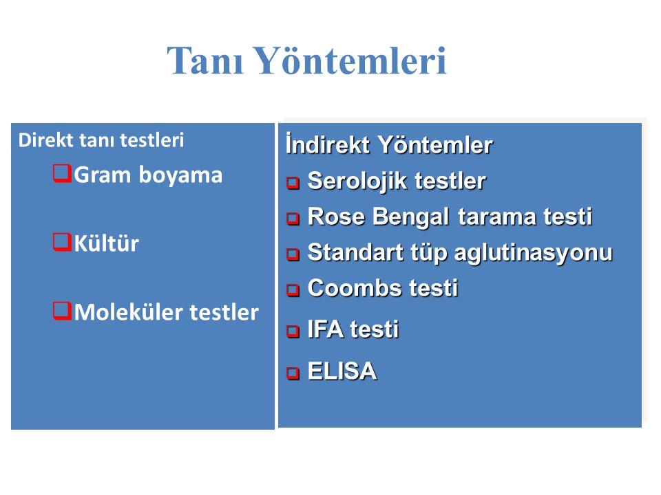 Tanı Yöntemleri Direkt tanı testleri  Gram boyama  Kültür  Moleküler testler İndirekt Yöntemler  Serolojik testler  Rose Bengal tarama testi  St