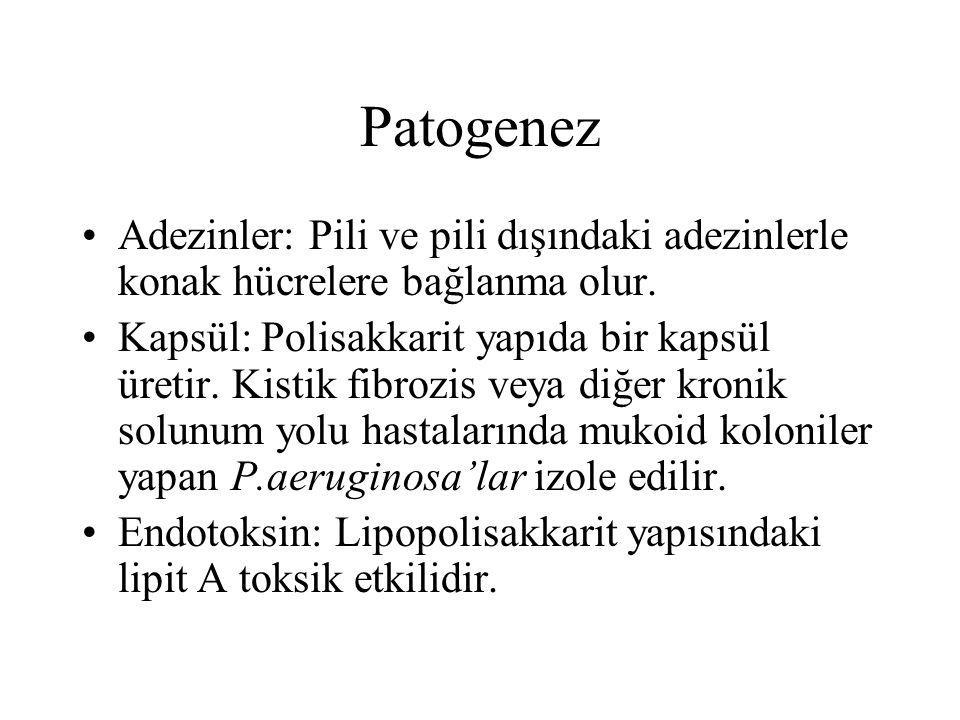 Patogenez Adezinler: Pili ve pili dışındaki adezinlerle konak hücrelere bağlanma olur. Kapsül: Polisakkarit yapıda bir kapsül üretir. Kistik fibrozis