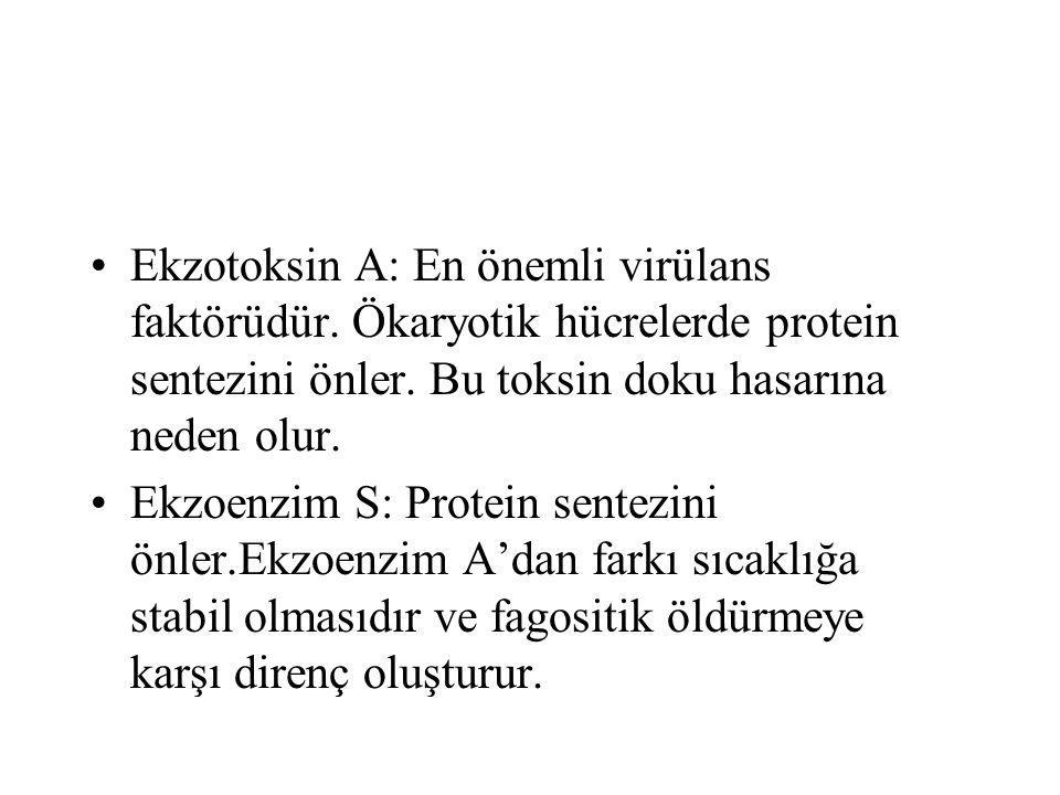 Ekzotoksin A: En önemli virülans faktörüdür. Ökaryotik hücrelerde protein sentezini önler. Bu toksin doku hasarına neden olur. Ekzoenzim S: Protein se