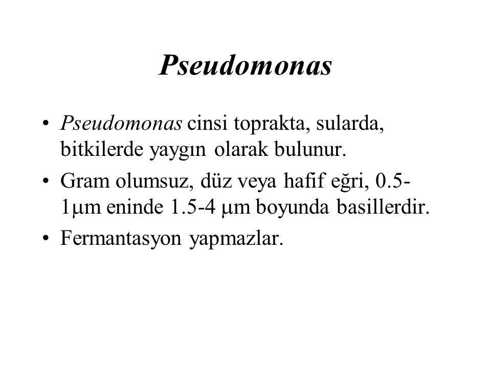 Pseudomonas Pseudomonas cinsi toprakta, sularda, bitkilerde yaygın olarak bulunur. Gram olumsuz, düz veya hafif eğri, 0.5- 1  m eninde 1.5-4  m boyu