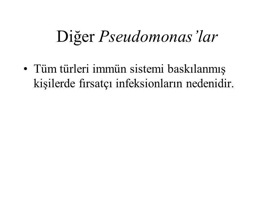 Diğer Pseudomonas'lar Tüm türleri immün sistemi baskılanmış kişilerde fırsatçı infeksionların nedenidir.