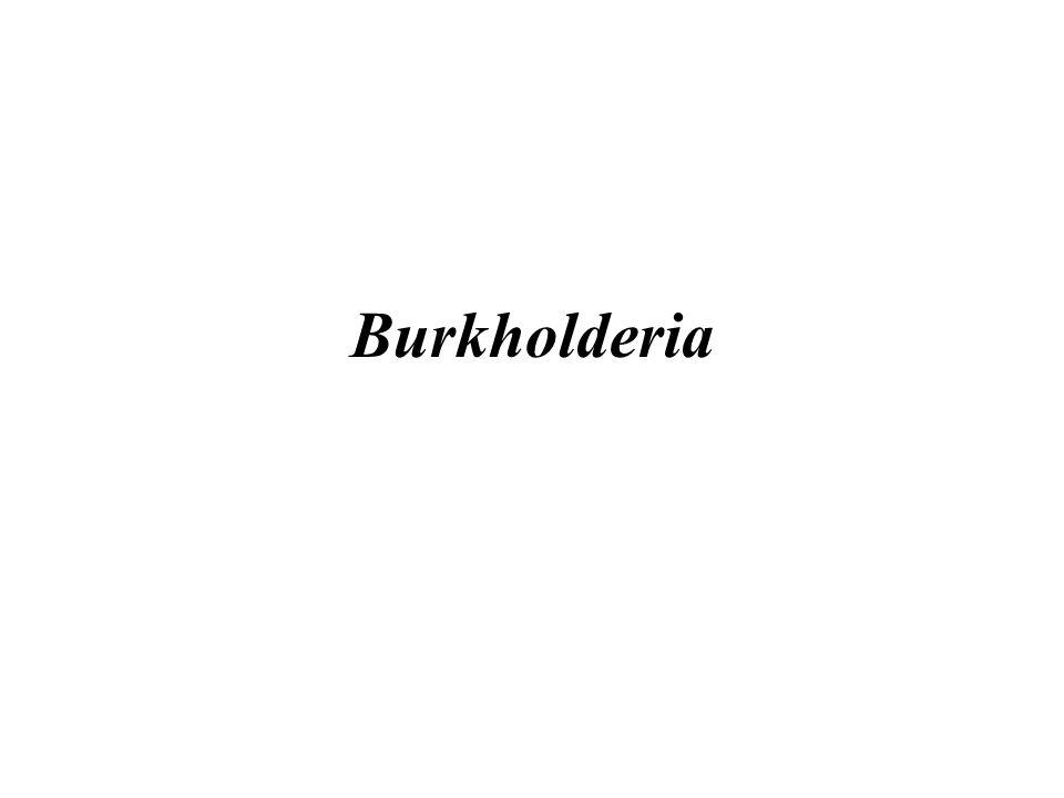 Burkholderia