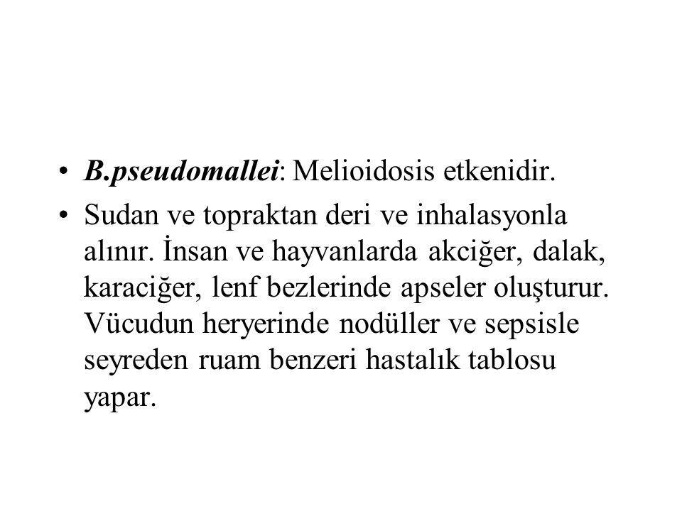 B.pseudomallei: Melioidosis etkenidir. Sudan ve topraktan deri ve inhalasyonla alınır. İnsan ve hayvanlarda akciğer, dalak, karaciğer, lenf bezlerinde