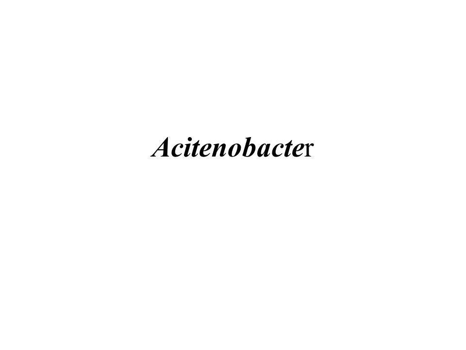 Acitenobacter