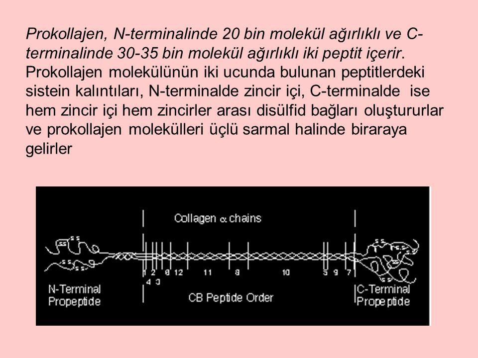 Prokollajen, N-terminalinde 20 bin molekül ağırlıklı ve C- terminalinde 30-35 bin molekül ağırlıklı iki peptit içerir.