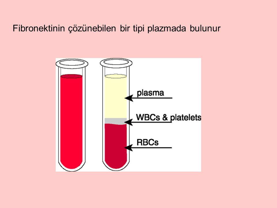 Fibronektinin çözünebilen bir tipi plazmada bulunur