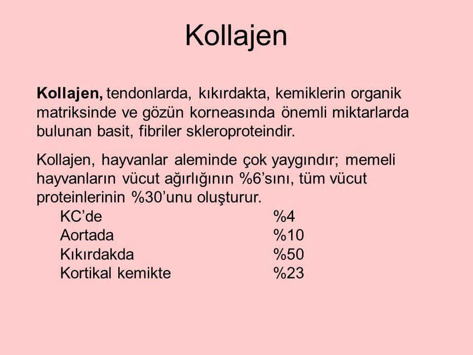 Kollajen Kollajen, tendonlarda, kıkırdakta, kemiklerin organik matriksinde ve gözün korneasında önemli miktarlarda bulunan basit, fibriler skleroproteindir.