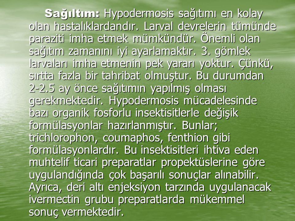 Sağıltım: Hypodermosis sağıtımı en kolay olan hastalıklardandır. Larval devrelerin tümünde paraziti imha etmek mümkündür. Önemli olan sağıtım zamanını