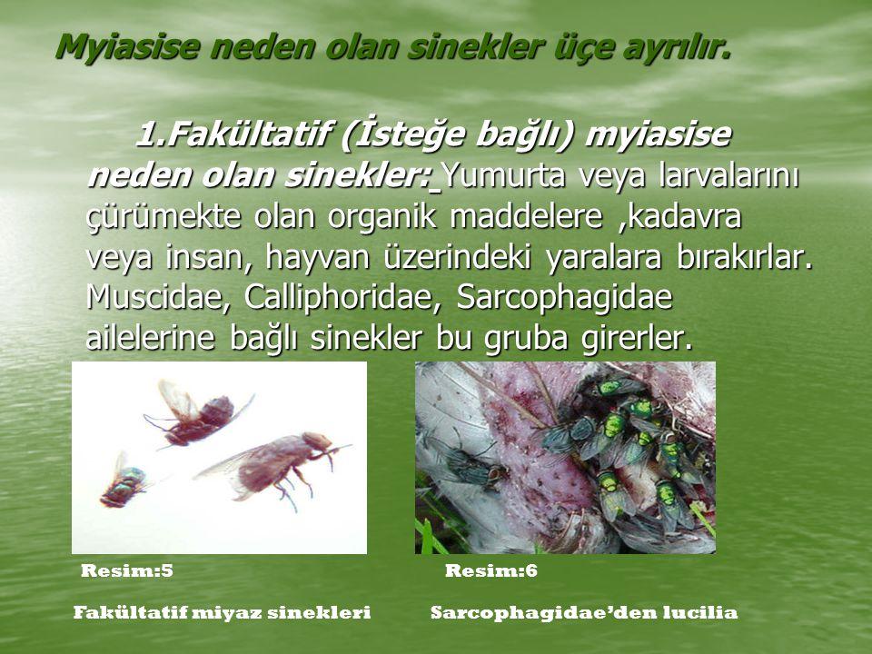 GASTEROPHILIDAE Bu ailede Gastrophilus soyu vardır.