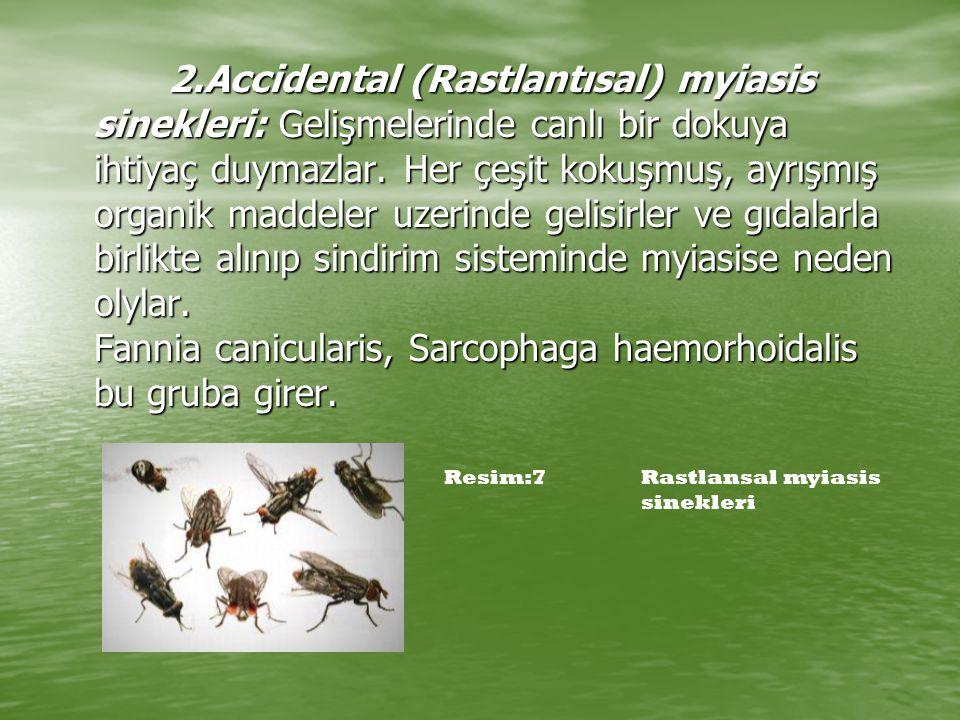 2.Accidental (Rastlantısal) myiasis sinekleri: Gelişmelerinde canlı bir dokuya ihtiyaç duymazlar. Her çeşit kokuşmuş, ayrışmış organik maddeler uzerin