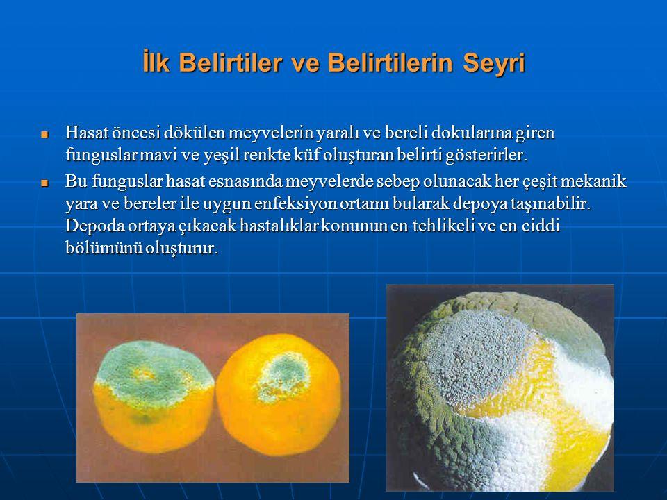İlk Belirtiler ve Belirtilerin Seyri Hasat öncesi dökülen meyvelerin yaralı ve bereli dokularına giren funguslar mavi ve yeşil renkte küf oluşturan be
