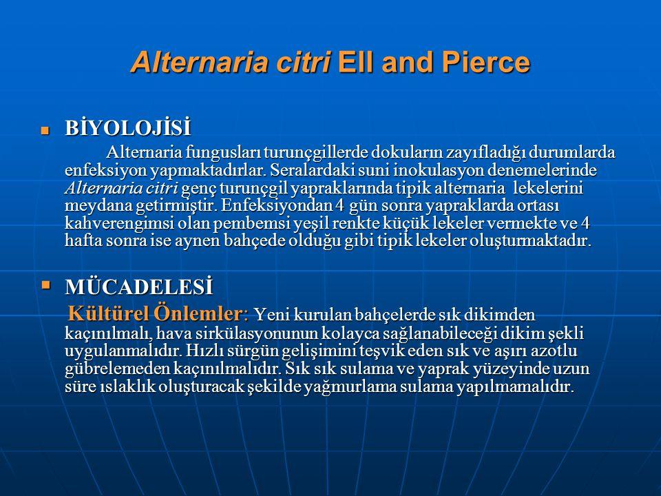 Alternaria citri Ell and Pierce BİYOLOJİSİ BİYOLOJİSİ Alternaria fungusları turunçgillerde dokuların zayıfladığı durumlarda enfeksiyon yapmaktadırlar.