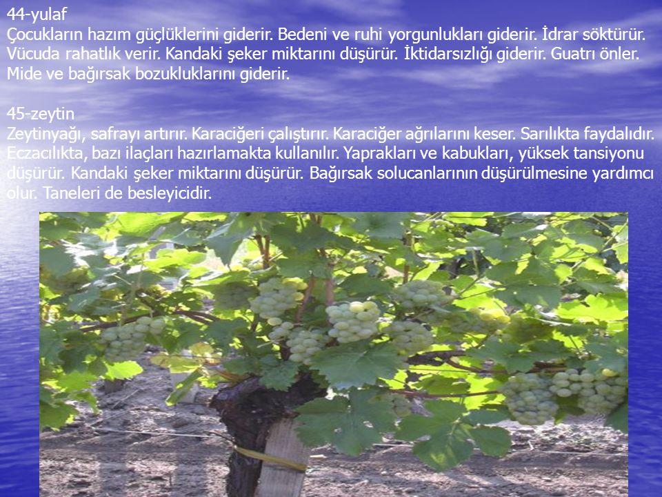 Hangi Bitkiler Hangi Dertlere Derman Oluyor.