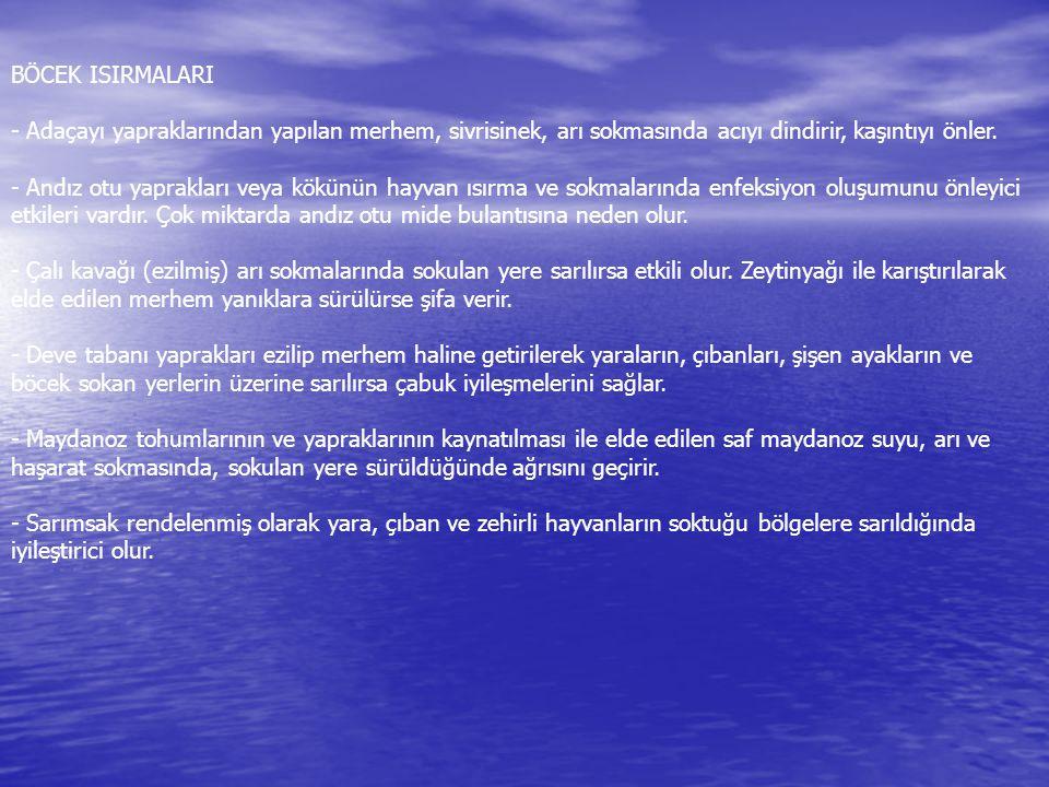 BOĞAZ HASTALIKLARI - Adaçayı iyi bir baharat ve antibiyotiktir.