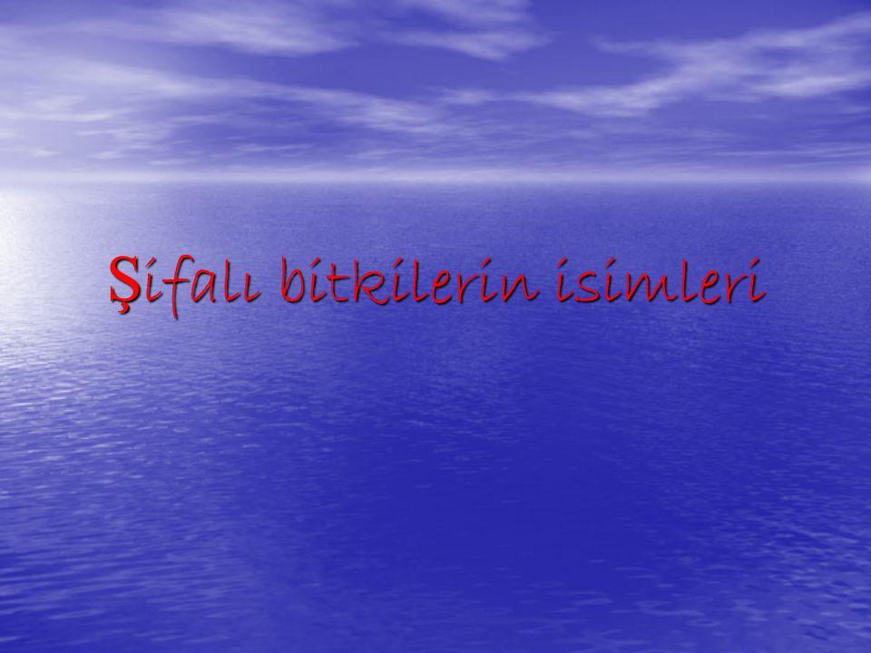 Abdüsselamotu (Adamotu), Acızambak (Tatula), Acıağaç, Acıbakla, Acıdiilek (Eşekhıyan), Acıkavun (Eşekhıyan), Acıpelin (Peünotu), Acıtahta (Acıağaç), Acıodun (Acıağaç), Acıot (Dövülmüşavratotu), Acıyonca (Suyoncası), Acıyonga (Acıağaç), Adaçayı, Adamotu,