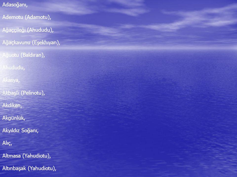 Adasoğanı, Ademotu (Adamotu), Ağaççileği (Ahududu), Ağaçkavunu (Eşekhıyan), Ağuotu (Baldıran), Ahududu, Akasya, AkbaşIı (Pelinotu), Akdiken, Akgünlük, Akyıldız Soğanı, Alıç, Altmasa (Yahudiotu), Altınbaşak (Yahudiotu),