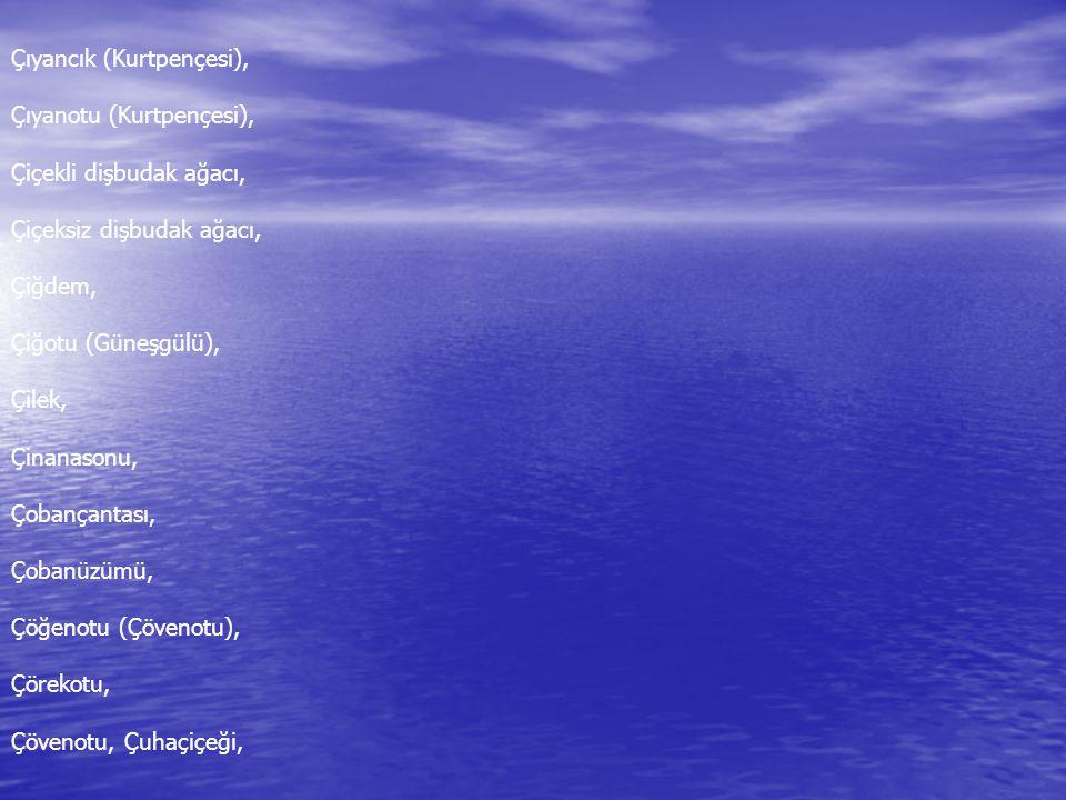 Çıyancık (Kurtpençesi), Çıyanotu (Kurtpençesi), Çiçekli dişbudak ağacı, Çiçeksiz dişbudak ağacı, Çiğdem, Çiğotu (Güneşgülü), Çilek, Çinanasonu, Çobanç