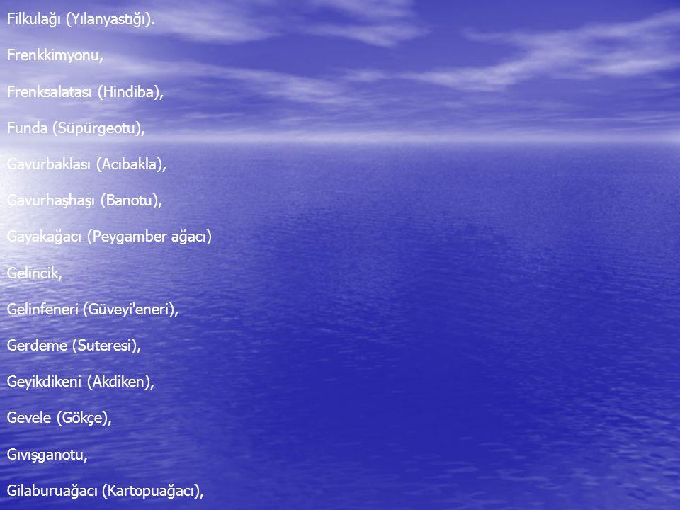 Filkulağı (Yılanyastığı). Frenkkimyonu, Frenksalatası (Hindiba), Funda (Süpürgeotu), Gavurbaklası (Acıbakla), Gavurhaşhaşı (Banotu), Gayakağacı (Peyga
