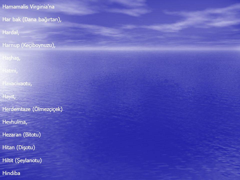 Hamamalis Virginia na Har bak (Dana bağırtan), Hardal, Harnup (Keçiboynuzu), Haşhaş, Hatmi, Havacivaotu, Hayıt, Herdemtaze (Ölmezçiçek) Hevhulma, Hezaran (Bitotu) Hitan (Dişotu) Hiltit (Şeylanotu) Hindiba