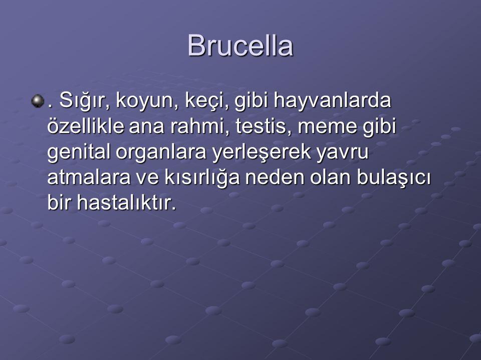 Brucella.