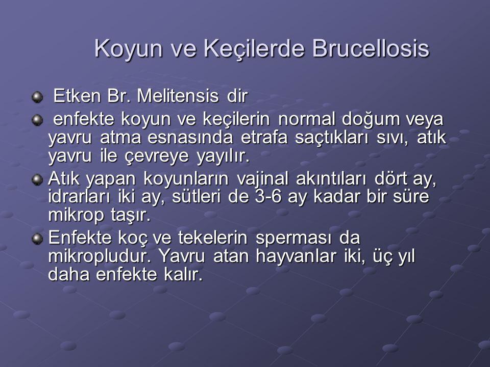 Koyun ve Keçilerde Brucellosis Koyun ve Keçilerde Brucellosis Etken Br. Melitensis dir Etken Br. Melitensis dir enfekte koyun ve keçilerin normal doğu