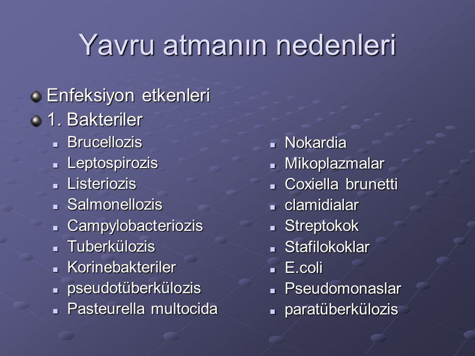 Yavru atmanın nedenleri Enfeksiyon etkenleri 1. Bakteriler Brucellozis Brucellozis Leptospirozis Leptospirozis Listeriozis Listeriozis Salmonellozis S