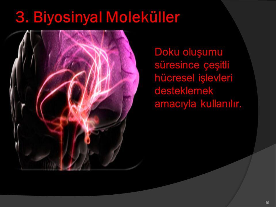 3. Biyosinyal Moleküller Doku oluşumu süresince çeşitli hücresel işlevleri desteklemek amacıyla kullanılır. 10