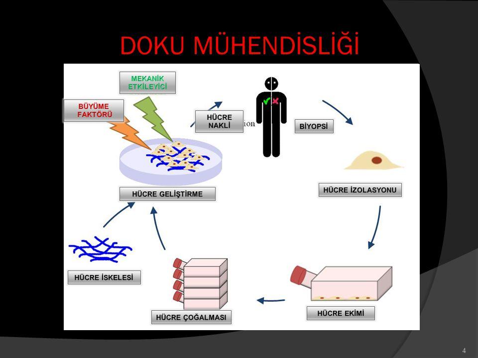 ORTAK ÇALIŞMALAR 5 Biyoloji Mühendislik Kimya Cerrahi
