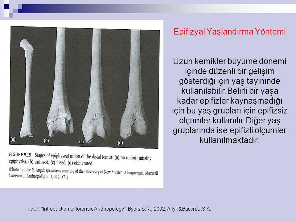 Epifizyal Yaşlandırma Yöntemi Uzun kemikler büyüme dönemi içinde düzenli bir gelişim gösterdiği için yaş tayininde kullanılabilir.Belirli bir yaşa kadar epifizler kaynaşmadığı için bu yaş grupları için epifizsiz ölçümler kullanılır.Diğer yaş gruplarında ise epifizli ölçümler kullanılmaktadır.