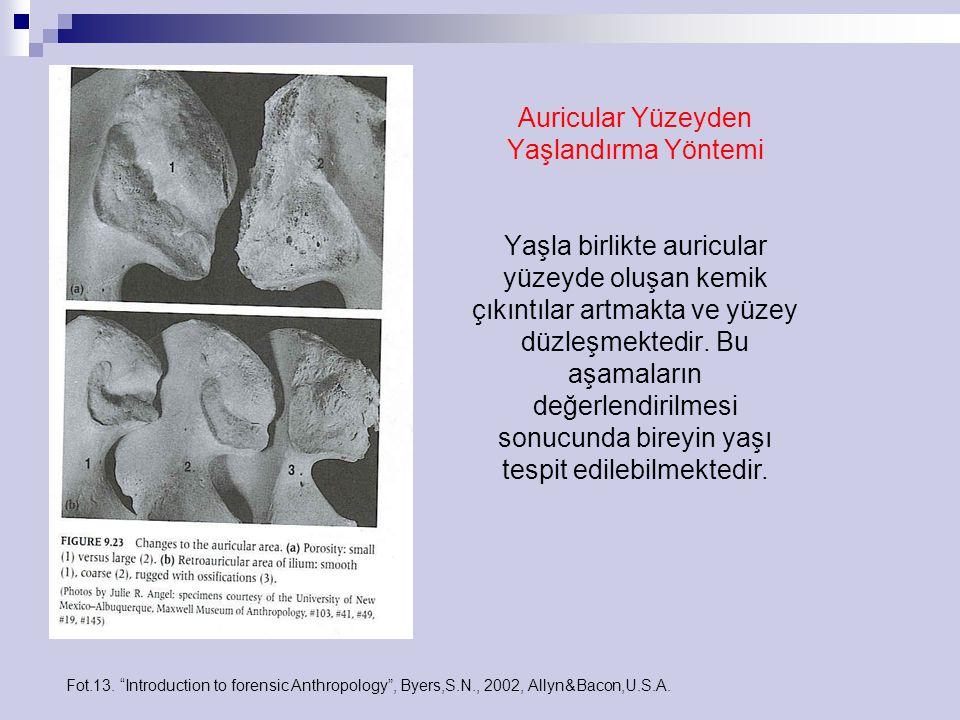Auricular Yüzeyden Yaşlandırma Yöntemi Yaşla birlikte auricular yüzeyde oluşan kemik çıkıntılar artmakta ve yüzey düzleşmektedir. Bu aşamaların değerl