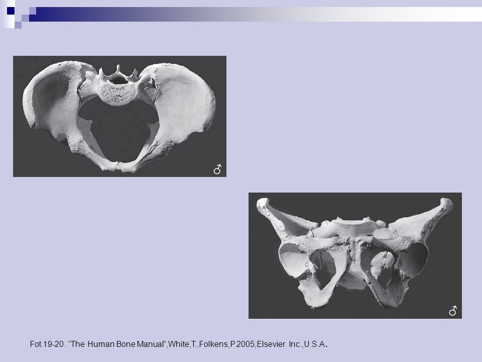 Fot.19-20. The Human Bone Manual ,White,T.,Folkens,P.2005,Elsevier Inc.,U.S.A.