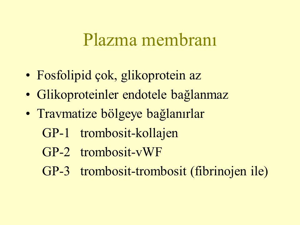 Plazma membranı Fosfolipid çok, glikoprotein az Glikoproteinler endotele bağlanmaz Travmatize bölgeye bağlanırlar GP-1 trombosit-kollajen GP-2 trombos