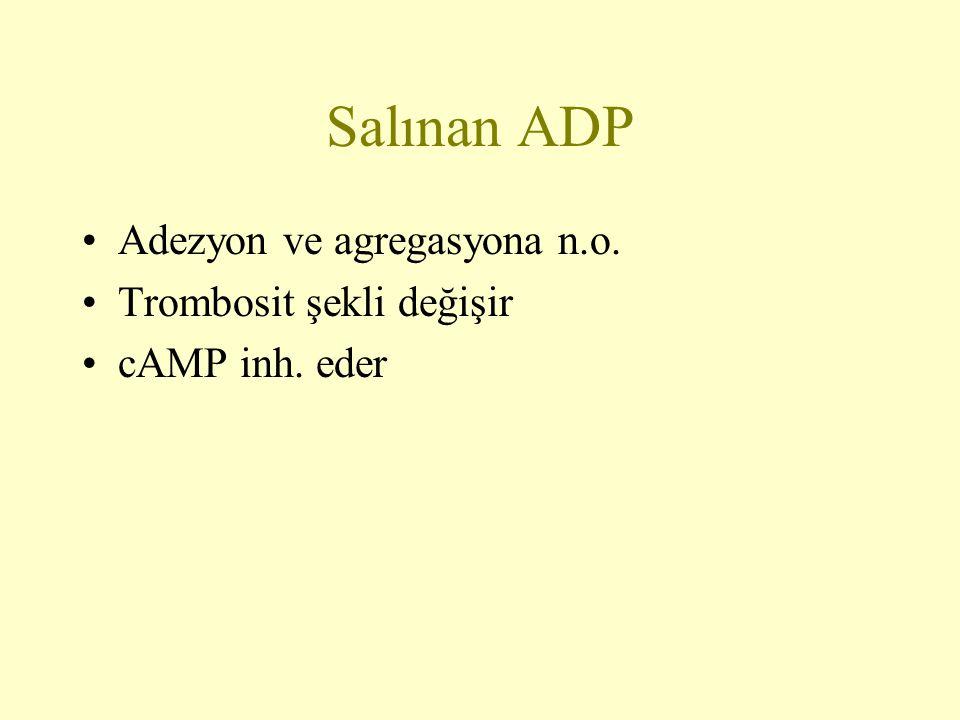 Salınan ADP Adezyon ve agregasyona n.o. Trombosit şekli değişir cAMP inh. eder