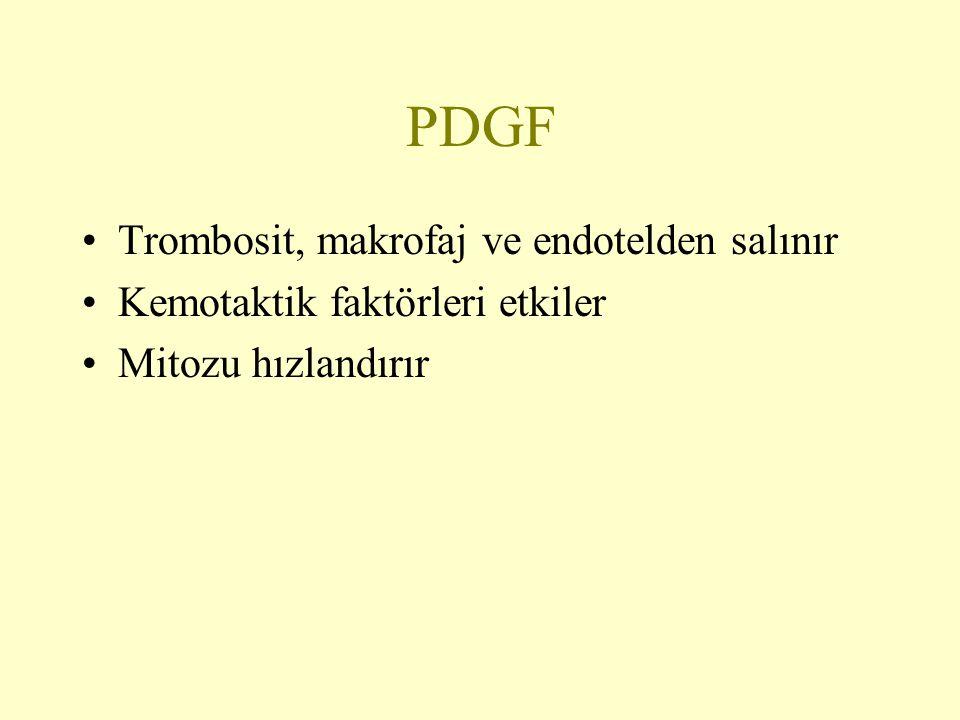 PDGF Trombosit, makrofaj ve endotelden salınır Kemotaktik faktörleri etkiler Mitozu hızlandırır