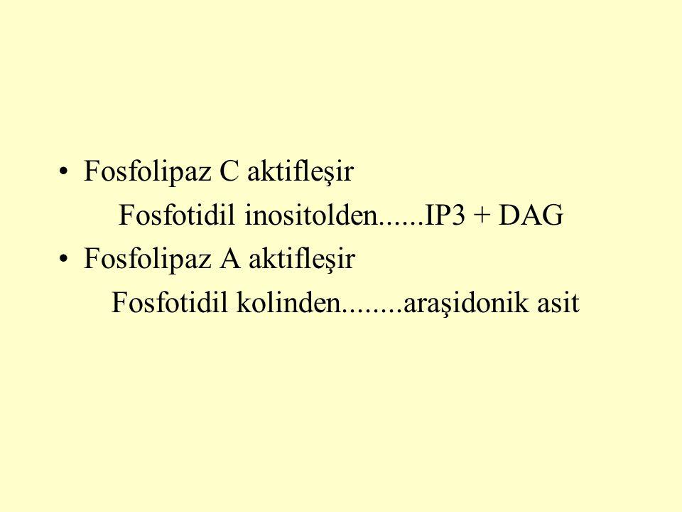 Fosfolipaz C aktifleşir Fosfotidil inositolden......IP3 + DAG Fosfolipaz A aktifleşir Fosfotidil kolinden........araşidonik asit