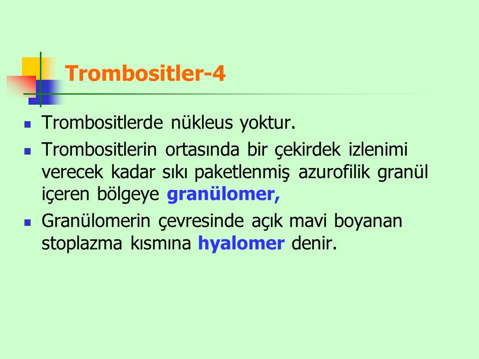 Trombositler-4 Trombositlerde nükleus yoktur.