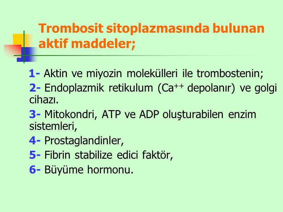 Trombosit sitoplazmasında bulunan aktif maddeler; 1- Aktin ve miyozin molekülleri ile trombostenin; 2- Endoplazmik retikulum (Ca ++ depolanır) ve golgi cihazı.